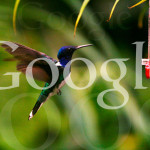 Google Hummingbird Algorythmus Update