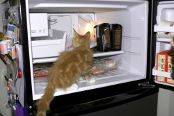 Der Kühlschrank der Zukunft
