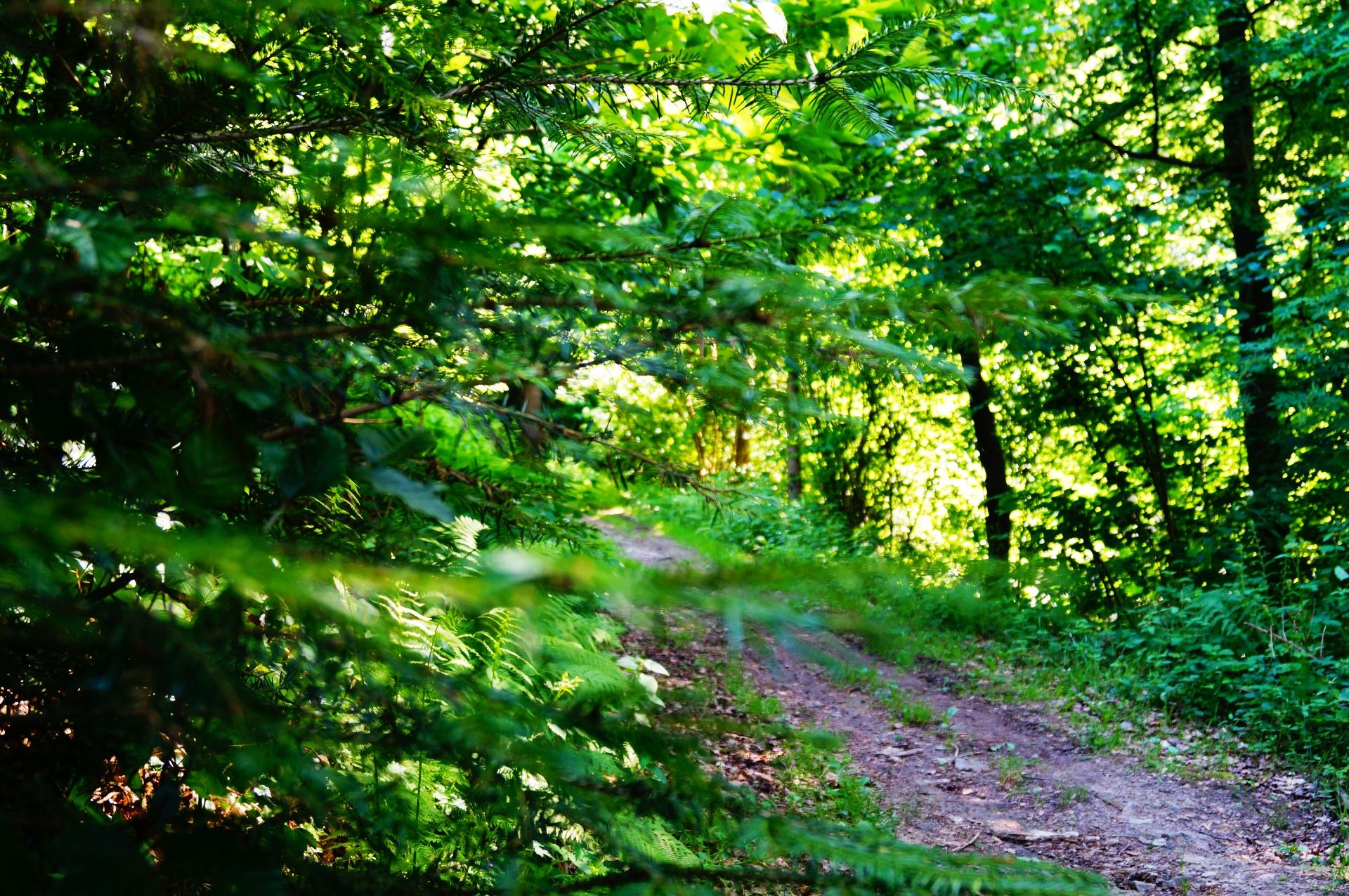 Evergreen Content wie im Wald